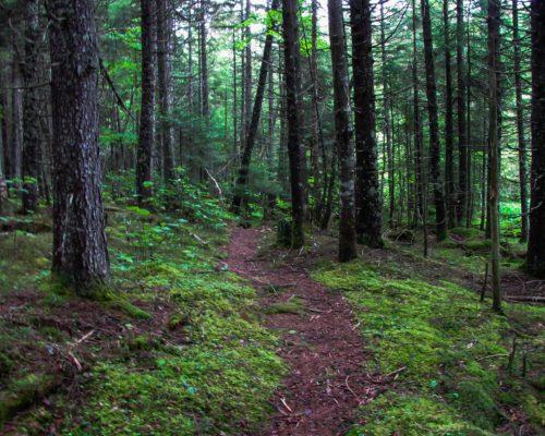 1PT Trail Hiking